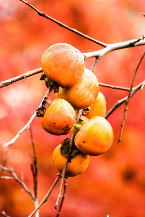 Kaki-Exotische-Früchte-in-Thailand-18-Sorten-die-man-probieren-muss-84