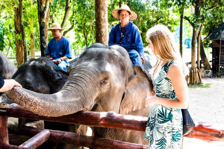 Thai-Elephant-Conservation-Center-Lampang-Elefantendorf-Thailand-06