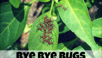 Bye Bye Bugs: Organic Vegetable Garden Pest Control