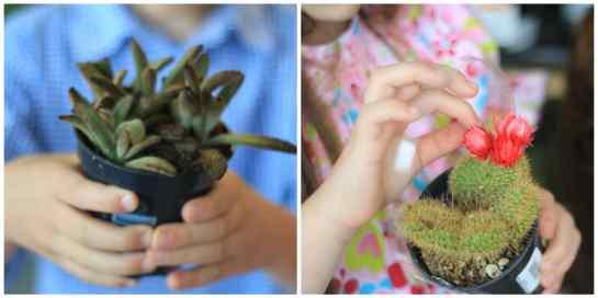 Favorite succulents