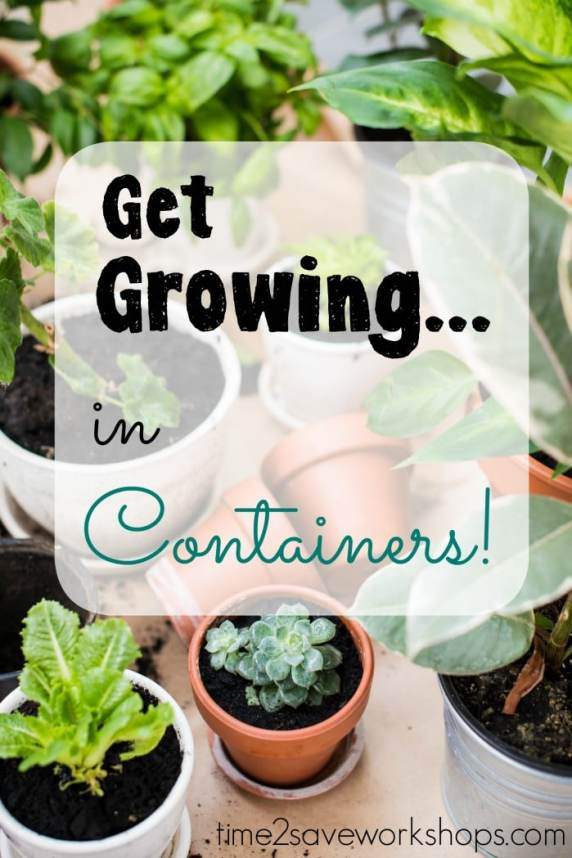get-growing-in-containers
