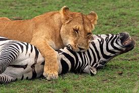 Хищники в природе