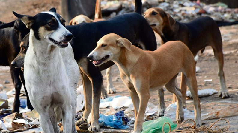 Stray Dog Menace Continues To Haunt Kashmir's Capital