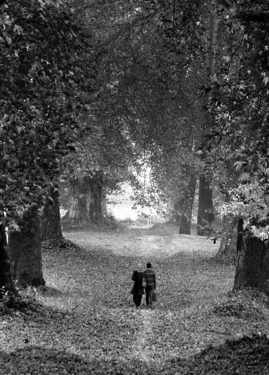 Crimson Canopy: In the autumn of our land, love-soaked souls often trample the shed-out miseries of life. Nay! Love is what we breathe, please don't cast aspersions. Under the silhouettes of serene chinars, we love to tread and trance.