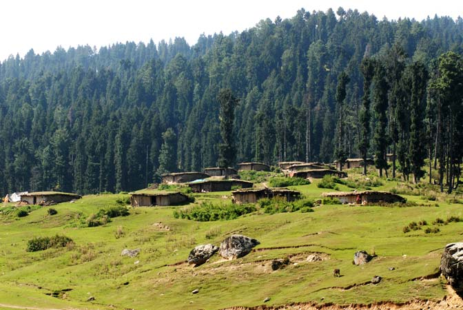 According to state law only Gujjars or Bakerwals can construct a Kotha on the forest land.