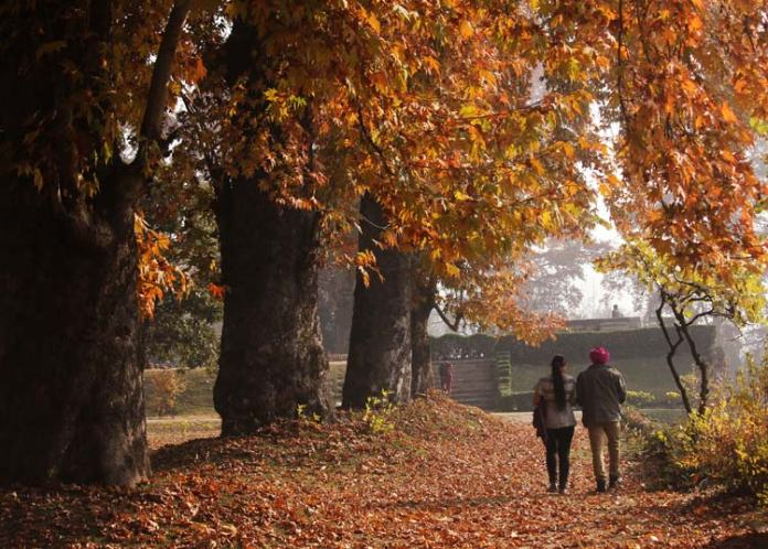 """""""Che Nar (What fire)?"""" - these words of a Persian poet who has visited the valley in the past are still resounding in the majestic chinar gardens of Naseem Bagh in the Kashmir University campus on the banks of the Dal Lake in Srinagar and other places."""