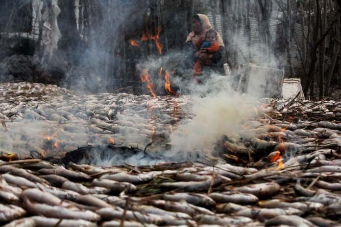 And then the grass is torched to smoke fishes on it.