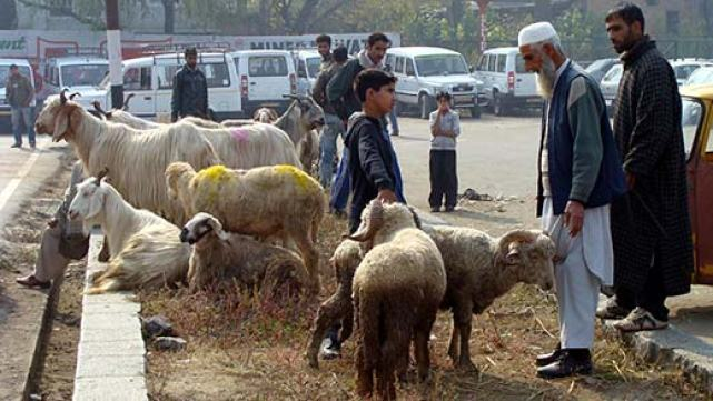Qurbani-Animals-on-sale-in-Srinagar-Kashmir