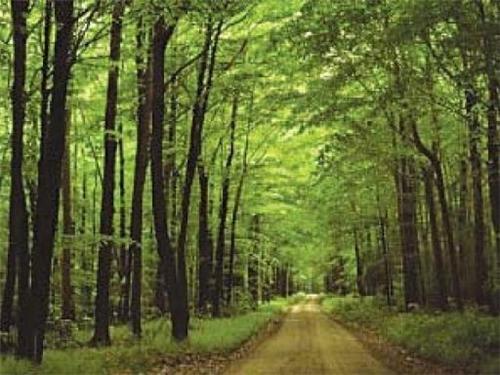 Kashmir Forests