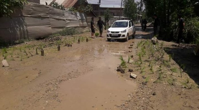 Paddy planted on Road