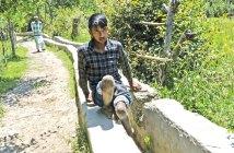 Nisar Ahmad Phamad - Painful Walk