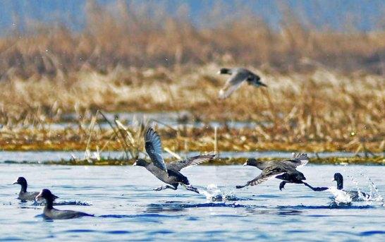 Demarcation Of Hokarsar Wetland, Peripheries Directed