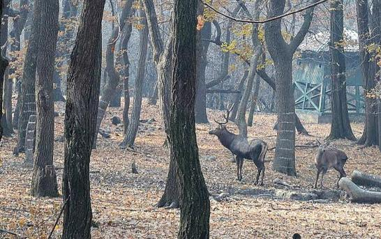 Wildlife Sanctuary Tag For Tral For Hungul Protection