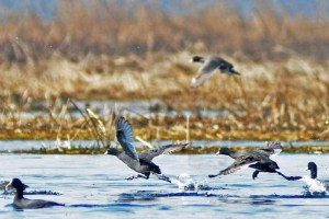 WPD Seeks Assistance To Protect Migratory Birds In JK