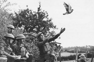 A Fascinating History Of The Carrier Pigeons