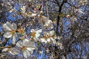 Badam Vaer: Almonds and Aura
