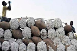Back To Business: Pakistan To Import Sugar, Cotton From India