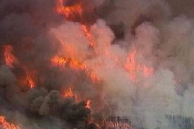 Wildlife, Forest departments' joint efforts avert major forest fire in Pulwama