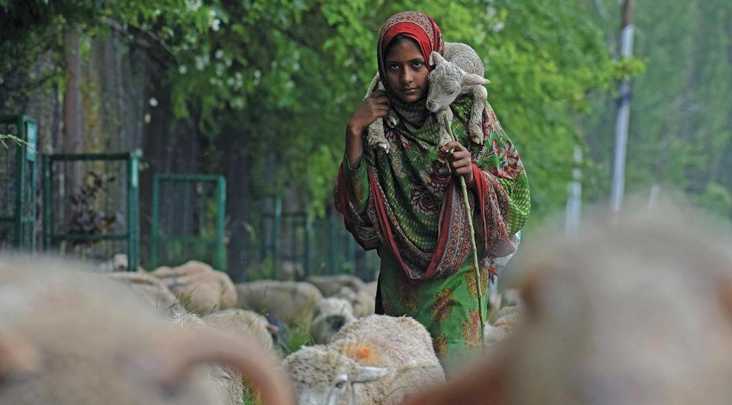 A nomad Bakerwal girl walks with her tribe to upper reaches of the Valley