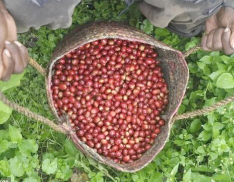 Post harvest management vital for farmers' income