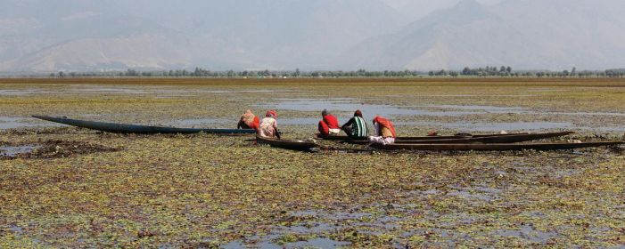 Immediately remove waste dumped at Wular Lake: High Court