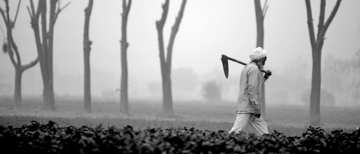 The Agrarian Crisis in Kashmir