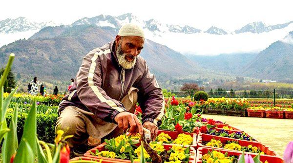 The 'Secular Spring': Nowruz in Kashmir