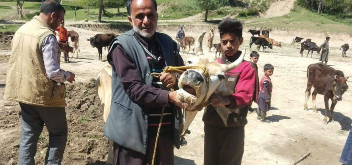 Budgam villages facing another viral outbreak: Foot and Mouth Disease