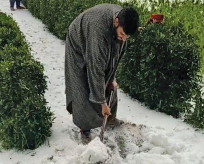 Intense hailstorm destroys vegetable, fruit crop in Shopian, Kulgam villages