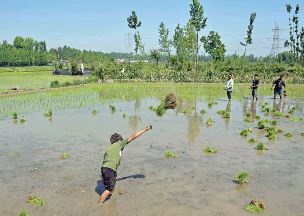 People working in paddy field in Valley