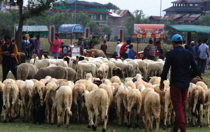 Deliver animals hides at our centres in Srinagar: Anjuman Nusrat-ul-Islam appeals peoples