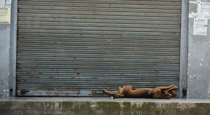 August 5: An Unusual Day in Srinagar