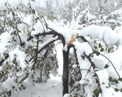 Kashmir snowfall: Two killed in Anantnag, death toll climbs to five