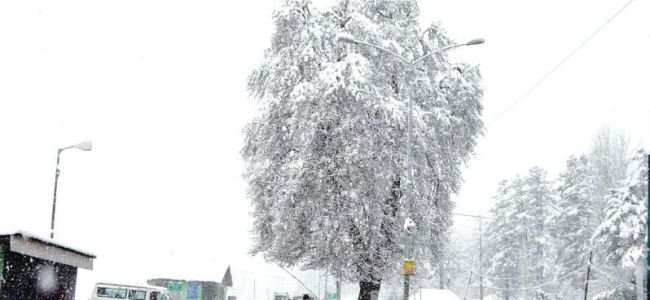 Kashmir reels under cold wave as fresh snowfall starts