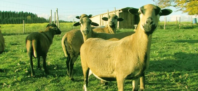 Availability of sacrificial animals, essential commodities for Eid ul Azha reviewed