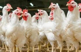 JK's first poultry estate coming up at Tral in south Kashmir