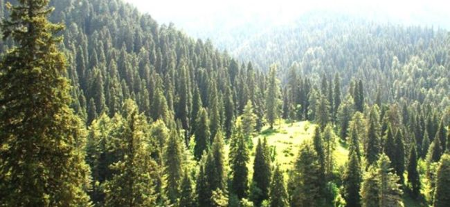 Forest department retrieves 500 kanals of forest land