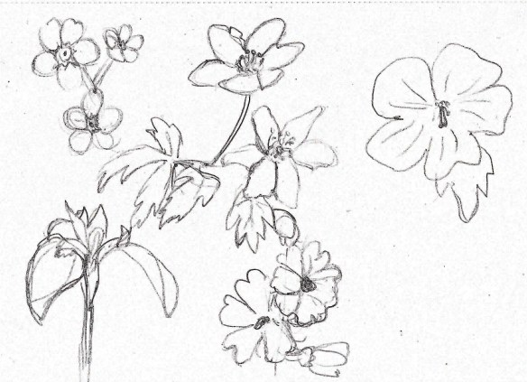forest flower sketches