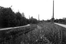 Wilderness meadows run alongside train tracks still in place