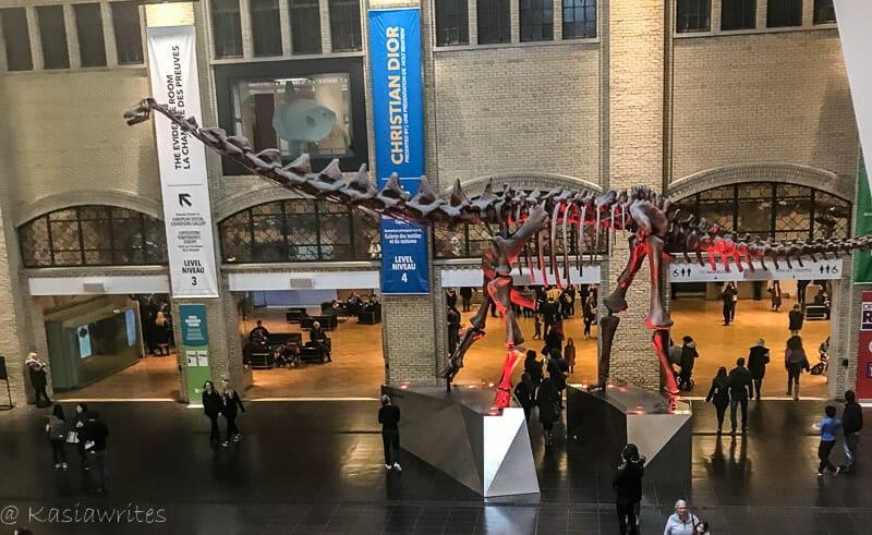The ROM: Toronto's Royal Ontario Museum