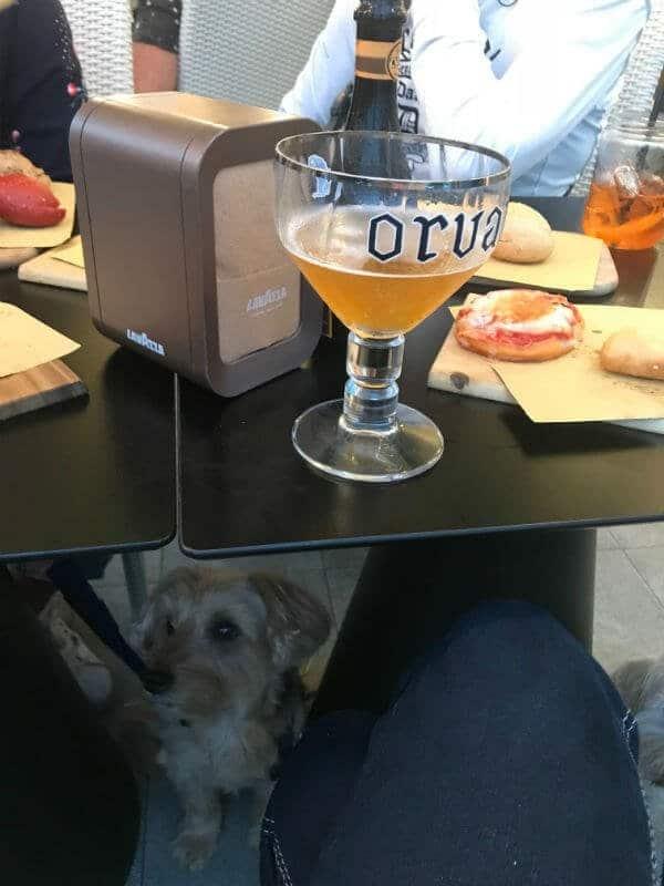 dog in a bar