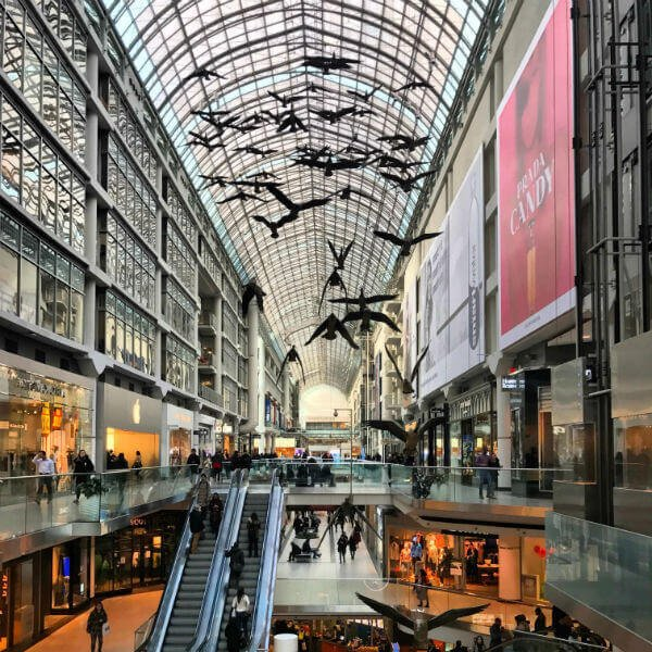 birds at eaton centre