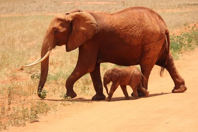 responsible travel wildlife protection two elephants