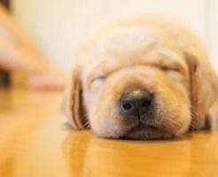 愛犬と楽しく暮らすアイデア