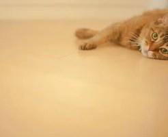 ペットと生活する新築・リフォーム住宅のヒント