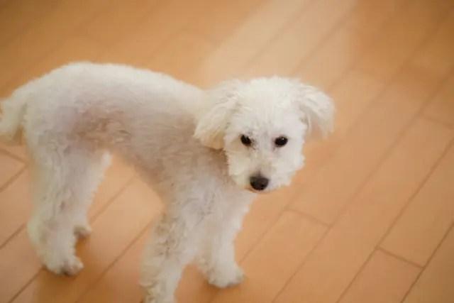 室内でペットを飼っている床はフローリングを張替えるのがおすすめ!!