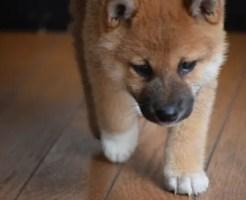 ペットと一緒に生活するときの床フローリングの選び方