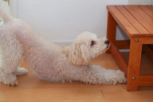 ペット犬の臭い対策!原因は?床についた臭いはどうする?