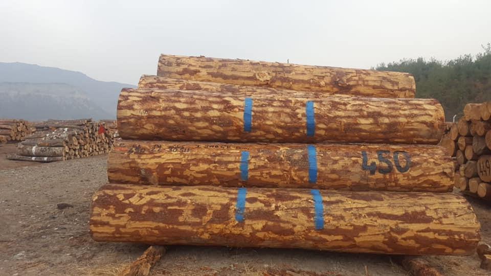 7 bin 213 metreküp orman emvali 3 milyon 341 bin 462 TL'ye satıldı