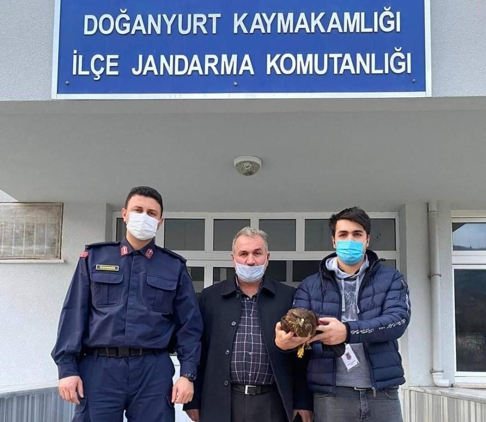 Jandarma, yaralı şahini elleriyle besleyerek korumaya aldı